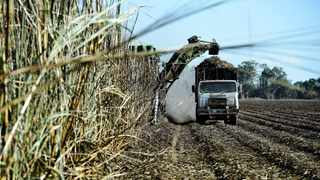 SAFDA said the sugarcane industry was worth protecting because it provided many jobs, was vital to many manufacturing processes and earned the country much-needed foreign currency. Picture: Carla Gottgens, Bloomberg.