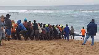 Sardines nets being hauled in on Wednesday near Bazley Beach in KwaZulu-Natal. Picture Nolene Outar.