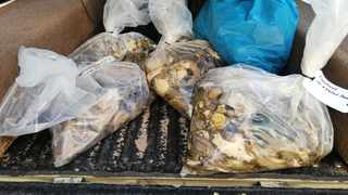 Shucked abalone seized by park officials. Picture: Supplied