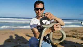 Snake catcher Jason Arnold at Glenashley Beach with a huge black mamba that beached after struggling against the waves. Picture: Supplied.