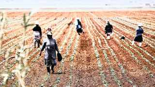 South Africa's agriculture economy rebounded in the first quarter of 2020 by 27.8 percent quarter on quarter on a seasonally adjusted and annualised basis after experiencing four consecutive quarters of contraction due to droughts, foot-and-mouth diseases among other factors. Photo: Siphiwe Sibeko/Reuters