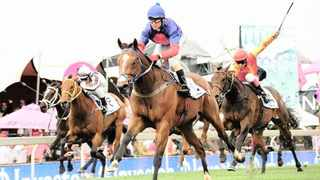 South Africa's fastest horses may not be racing, but a branch of the country's richest family is pumping money into the industry. Supplied