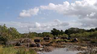 St Lucia is home to the largest free-roaming hippo population in South Africa.