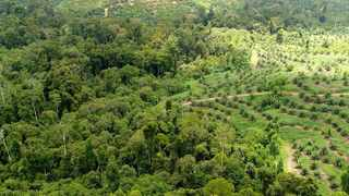 THE certification of palm oil will improve prospects for wildlife, including orang-utans.