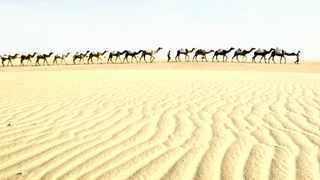 TOO SLOW: A massive increase in speed - at least ten-fold - is required if the Great Green Wall for the Sahara and Sahel is to become great in our lifetime. More resources will also be needed, but a ten-fold increase is unlikely.Picture: Reuters