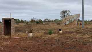 The Giyani Stadium is now a grazing field for cattle. Picture: Supplied