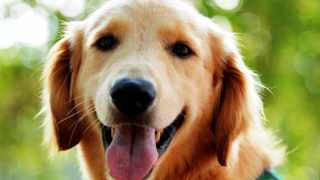 The Kennel Club is hoping to address accusations of inbreeding which were raised in a 2008 BBC documentary, Pedigree Dogs Exposed.