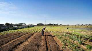 The Schaapkraal Civic and Environmental Association says there is enough land in Cape Town to address the lack of housing. Picture: Henk Kruger/African News Agency (ANA)