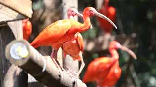 The Umgeni River Bird Park was designed and built by Dr Alan Abrey. Picture: Zanele Zulu/African News Agency (ANA)