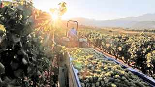 The Western Cape Department of Agriculture will provide crucial relief to employees in the local wine tourism sector. Picture: Mike Hutchings/Reuters