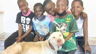 The five young boys from Philippi who found a dog stranded in the bush and used their initiative to lead him to safety. They have been praised and rewarded for their act of kindness. Picture: Supplied