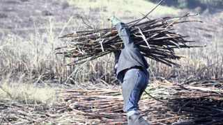 The increasing number of violent farm attacks has seen children of farmers opt for professional careers rather than taking over their family businesses