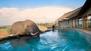 The saltwater pools at Mhondoro Safari Lodge & Villa are eco-friendly and don't pose any risk to the animals.