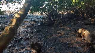 This photo taken and provided by Sophie Seneque, shows debris in Riviere des Creoles, Mauritius. Picture: AP