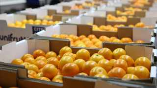 Transnet Port Terminals (TPT) were now resourced and geared to handle arriving volumes of citrus across its network of terminals, the entity said on Friday after citrus farmers delivering product for export were temporarily asked to suspend packing until Thursday. Picture: Zanele Zulu/African News Agency (ANA)
