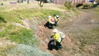 UNEMPLOYED people from Knysna are cleaning the town's beaches and estuary as part of an initiative by SANParks.