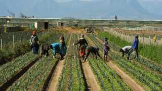 While South Africa was benefiting from an abundant harvest and high prices for agricultural commodities, rising input costs could erode these gains when farmers embark on the 2021/22 production season. Picture: Tracey Adams/African News Agency(ANA)