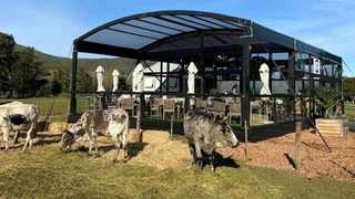 With July being National Hot Dog Month, the innovative culinary team at Vergelegen wine estate in Somerset West in Cape Town has set up a gourmet hotdog café in the scenic surroundings of its Nguni cattle pastures. Picture: Supplied