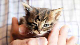 You can expect that a kitten will more easily take to the litter box than a full-grown cat. Picture: Jacques Naude African News Agency (ANA)