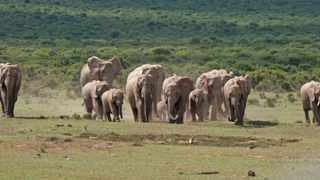 A herd of African elephants move to a waterhole. File picture: Ian Landsberg/African News Agency (ANA)