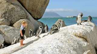 Boulders Beach visitors are threatening the survival of the penguin colony by overstepping the boundaries instead of maintaining a three-metre distance. Picture: Gary Van Wyk/African News Agency