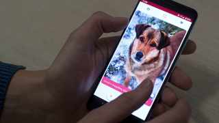 A man looks at a mobile phone app that helps people find dogs in animal shelters in Vilnius, Lithuania. A group of enthusiasts have launched the app that helps match aspiring dog owners with stray dogs. Picture: Mindaugas Kulbis/AP
