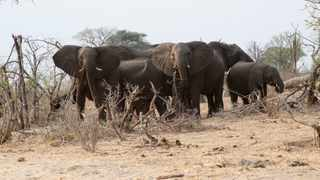 (190304) -- MAUN, March 4, 2019 (Xinhua) -- A herd of elephant. (Xinhua)