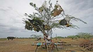 A shepherd takes a rest under a tree on a dried-up lake on the outskirts of Chennai. Picture: P. Ravikumar/Reuters