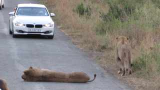 For those who do not see themselves in a game vehicle with other travellers, a self game drive is a good option. Picture: Supplied