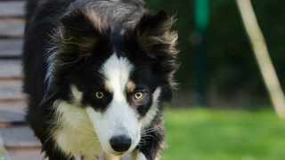 Reprimanding your dog only works if you catch him in the act. Picture: Pexels