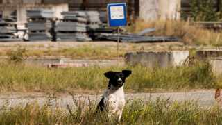 Armchair travellers can enjoy virtual visits with the dogs of Chernobyl (pictured), cook with a Moroccan family, meditate with Buddhist monks or join a rollerskating party in New York. Picture: Supplied.