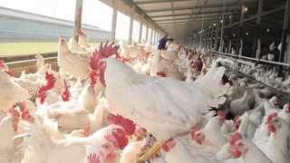 Avian influenza was detected in chickens for the first time in late June in Mpumalanga and has spread to other provinces including KwaZulu-Natal. Picture: ANA