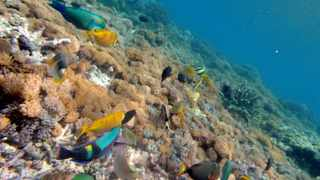 Many coral reefs, often described as the tropical rainforests of the oceans because of their rich diversity of life, could be threatened with extinction by mid-century.