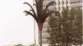 A cellphone transmission mast, disguised as a palm tree, at George Campbell Technical High School in Durban. With the introduction of cellphones, reception was initially sporadic and unreliable.