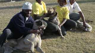 South Africa has many more dogs than cats. File picture: Bongiwe Mchunu