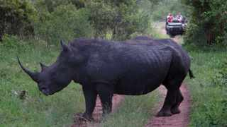 A rhino stands in a road near Kruger National Park. Tourism will experience a big boost if locals are able to take advantage of special deals at reduced rates, maintains the author. Photo: AP