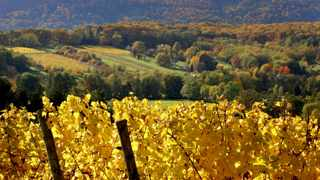 A vineyard in Soultz, in the Alsace region of eastern France. Picture: Jacky Naegelen