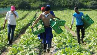 WHO OWNS THE LAND? Farmworkers labour at a farm in Philippi. Tracey Adams/African News Agency (ANA)