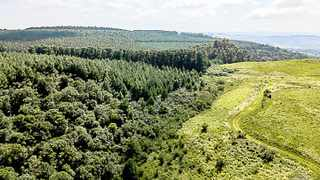 The lush forest at Balgowan in the KZN Midlands forms part of an eco-estate and is among the lots for the BidX1 online sale on April 10.