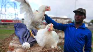 SA REVENUE Service data shows that whole chickens are imported at prices as low as R6 a kilo, hurting the local trade. Pando Jikelo African News Agency (ANA)