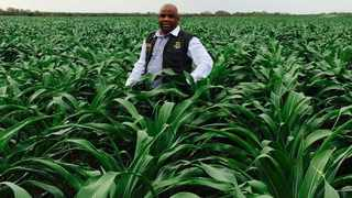 Less rainfall and warmer temperatures are to blame for a significant decrease this year in the area planted to maize. File Photo: IOL