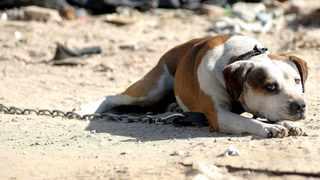 An elderly woman was mauled to death by a dog in Mpumalanga, private emergency services provider ER24 said in a statement. File picture: Matthew Jordaan/ANA
