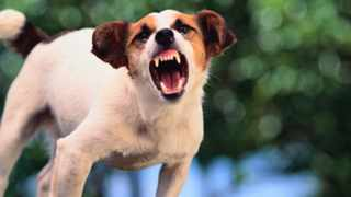 Rabies is on the increase in KZN. By the end of last month, 122 dogs had tested positive.