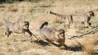 Free State offers plenty of activities, sightseeing opportunities and cultural experiences. The Cheetah Route offers many adventures. Picture: Cheetah Experience.