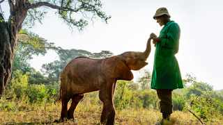 A young orphaned elephant with his keeper at The David Sheldrick Wildlife Trust's Nairobi nursery in Kenya, Africa. Picture: Supplied