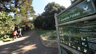 Newlands Forest is teeming with criminals who are targeting vehicles in the parking lot of the seemingly tranquil forest. Picture: Armand Hough/African News Agency(ANA)