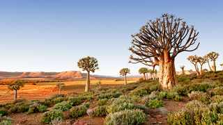 The Northern Cape has a lot to offer. Picture: David Burstein