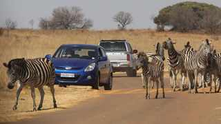 Visitors look at Zebras at the Rietvlei Nature Reserve. Picture: Jacques Naude/African News Agency (ANA)