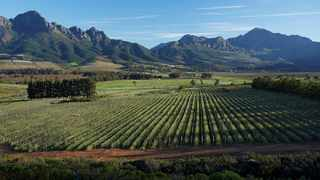 Vergelegen Estate in Somerset West has launched an environmental tour to commemorate Heritage Month. Picture: Supplied.