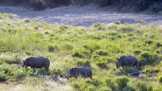 Kruger National Park, the country's largest and best-known national park, is involved in an effort to ensure disability is not a barrier to enjoying the park. Picture: Armand Hough